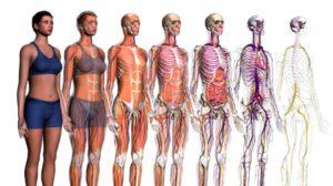 corpo umano nuove scoperte