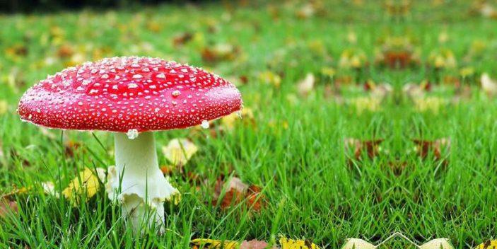 Ecco i funghi velenosi e mortali.