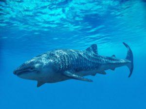 Il pesce più grande del mondo.