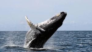 Ecco cosa mangia una balena.