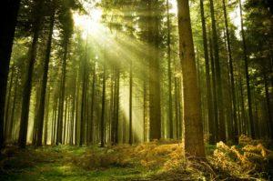 Il bosco e la foresta.