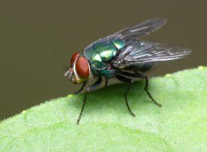 La mosca.