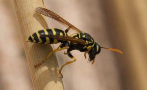 Una vespa.