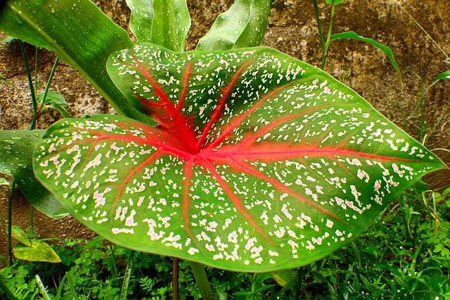 Ecco una pianta che ha bisogno di poca luce.