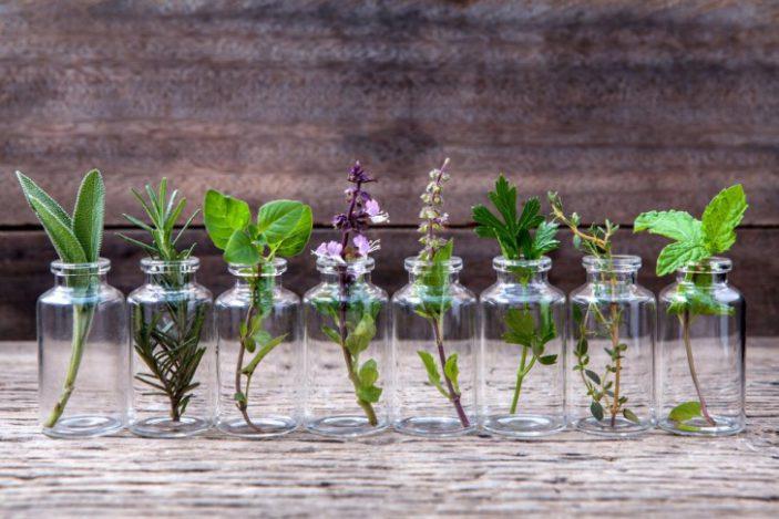 Le piante che crescono in acqua.