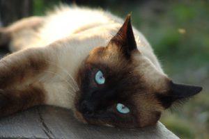 I gatti più affettuosi.