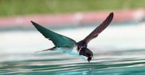 Gli uccelli che migrano.